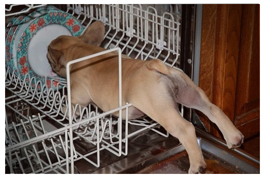 This Puppy In The Dishwasher.