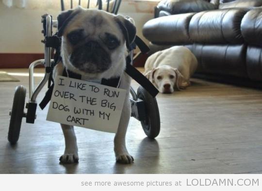 This Dog Shaming Photo.