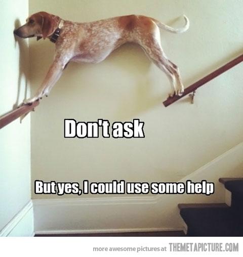 This stuck dog.