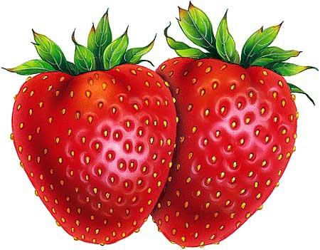 The Perfect Strawberries. (Thanks tokesignals.)