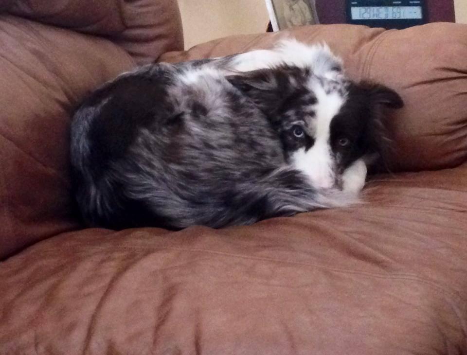 Photo of sleeping dog.